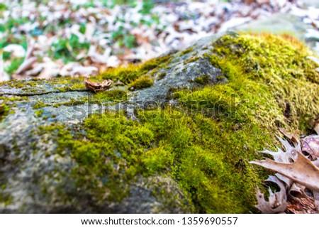 Moss on rock  #1359690557