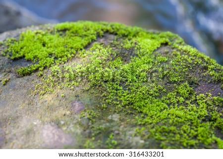 Moss on rocks abundance, Soft focus.