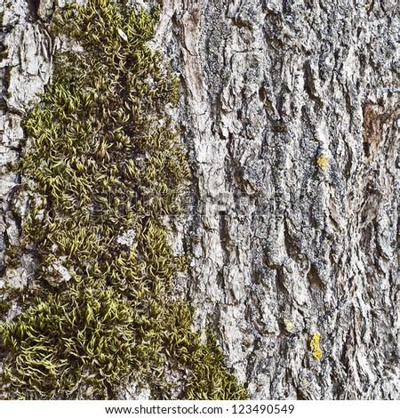 moss on the tree bark