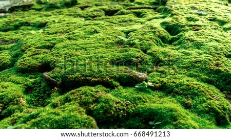 Moss on the wall #668491213