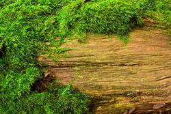 moss on tree, background