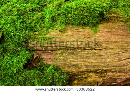 moss on tree, background