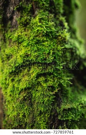 Moss on wood. Nature wallpaper