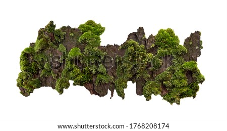 Photo of  Moss or Mosses on a pine bark, Green moss on a tree bark isolated on white background, with clipping path