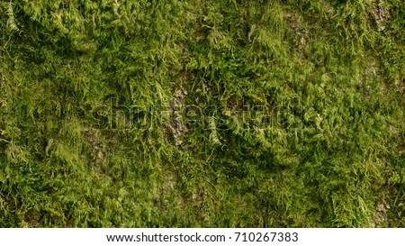 Moss Seamless Texture #710267383