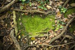 Moss Texture Background