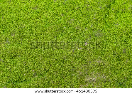 Moss texture for background