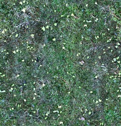 Moss texture for forest floor, or old mossy felled tree - seamless pattern. Green Ground detailed background for 3d material surface or Web Design with nature.