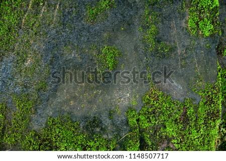 Moss texture. Moss background. Green moss on grunge texture, background #1148507717