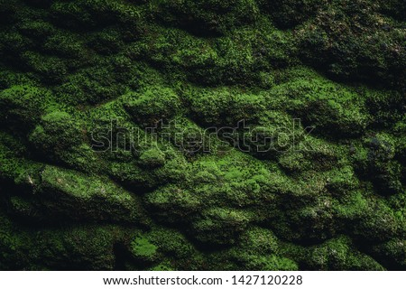 Moss texture. Moss background. Green moss on grunge texture, beautiful in nature