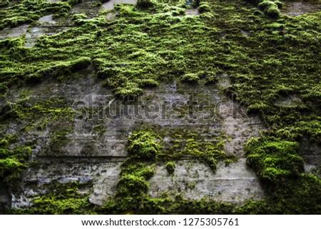 Moss texture. Moss background. Green moss on rock. Wall, background. #1275305761