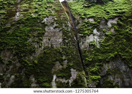 Moss texture. Moss background. Green moss on rock. Wall, background. #1275305764