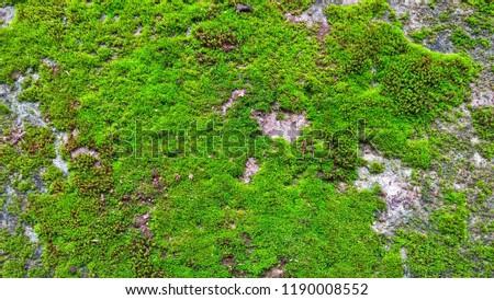 Moss texture. Moss background. Green moss on  texture, background #1190008552