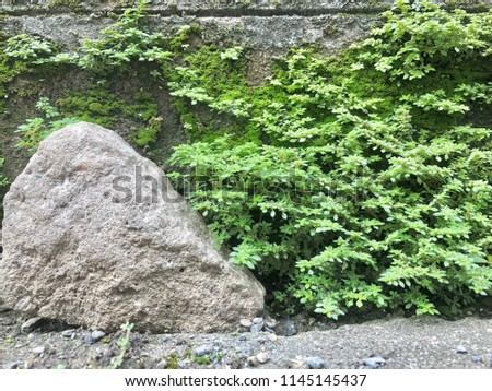 Moss texture. Moss background. Green moss on wall background  #1145145437