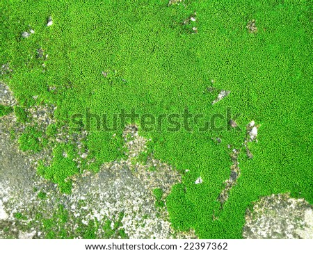 moss texture top view - stock photo