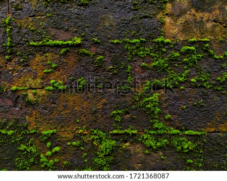 Moss textures background. Green moss on Stone background. Stone with Green moss. Green mosses background.Colorful Moss wall background at Buddhist monastery