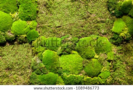 Moss. The texture of the moss #1089486773