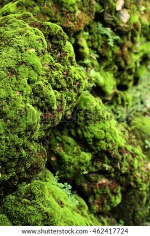 moss / tropical rain forest #462417724