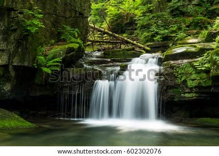 moss, water, brook, leaves, stones, nature, waterfall, landscape, mystery, tree, trunk, broken, bracken