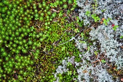 Mosses and lichens of Karelia