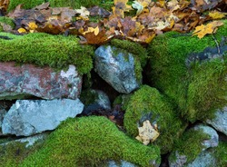 Mossy boulders with autumn leaves