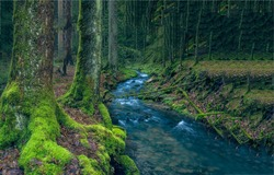 Mossy forest creek. Stream in the woods