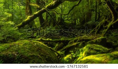 Mossy forest in Yakushima Island, Kagoshima prefecture, Japan Сток-фото ©