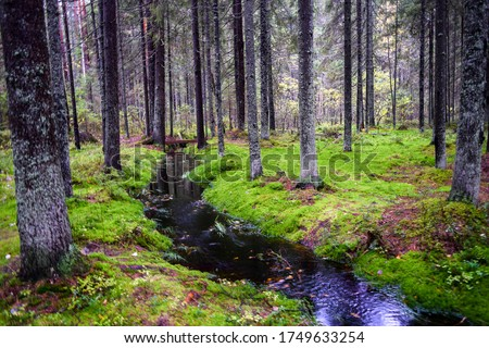 Mossy forest river creek landscape. Wilderness forest creek view. Mossy forest wilderness creek. Forest creek landscape