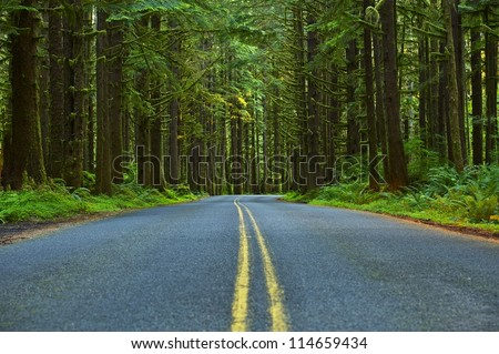 Mossy Forest Road - Washington State Olympic Peninsula. Olympic National Park. Washington State Photo Collection.