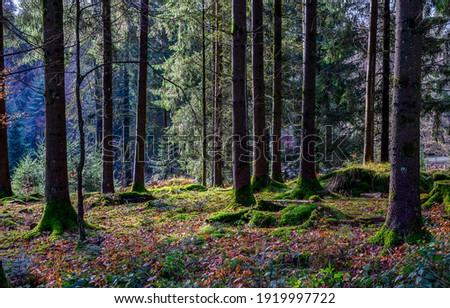 Mossy forest trees. Forest moss view. Forest trees moss. Mossy forest scene
