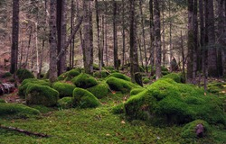 Mossy forest view. Wilderness mossy forest. Green moss in wilderness forest. Woodland green moss