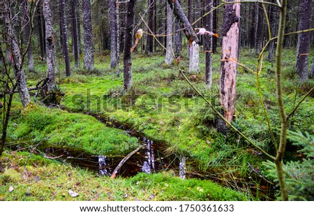 Mossy forest wilderness creek view. Wilderness mossy forest scene. Forest moss view