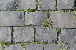 Mossy gray stone pavement in the park