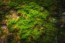 mossy green grey stone background texture
