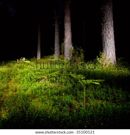 Mossy meadow with fern at night pinewood