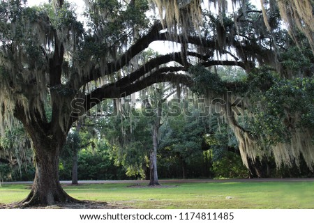 Mossy Oak Trees in New Orleans Area next to Lake Pontchartrain and Bayou Bonfuca - Swamp and Marsh Land