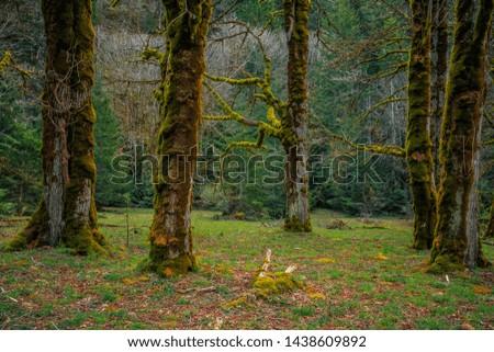 Mossy Olympic Forest, Olympic National Park Washington