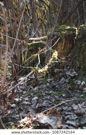 mossy stomps dry leaves