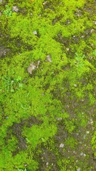 Mossy Stone Pathways - Wet Vintage Surface Background Texture