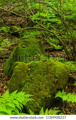 Mossy Stones in Forest in Japan