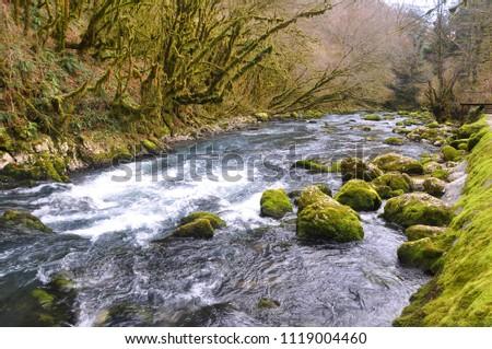 Mossy stones in line Mchishta River #1119004460