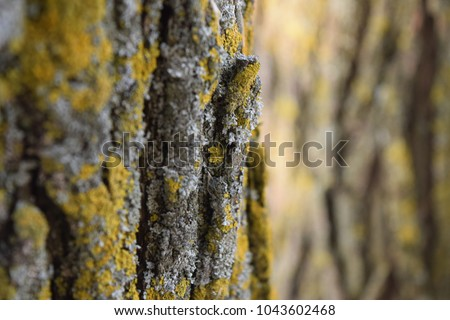 mossy tree close up