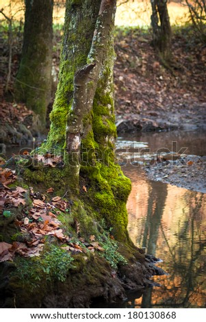 Mossy tree in the forest
