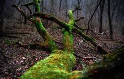 Mossy tree trunk in forest scene. Tree trunk moss. Tree trunk green moss. Mossy tree trunk on ground