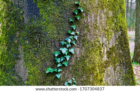 Mossy tree trunk leaves view. Tree trunk close up. Tree trunk in forest