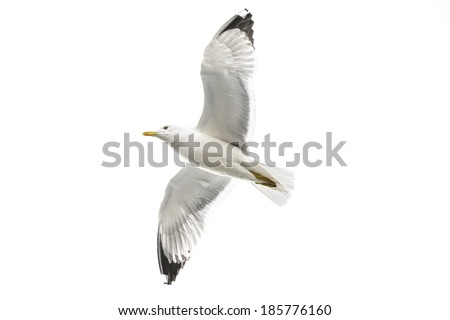 Most famous among seabirds, gulls belong to the family of the same name in the squad Charadriiformes. There are about 60 species of birds.