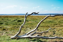 Most of a tree has been washed up on the grassy flood plains of the river Severn estuary in western England. In the background is Wales.