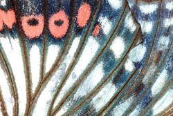 moth butterfly wing detail texture background