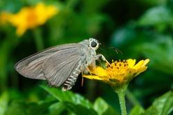 Moth on a flower.
