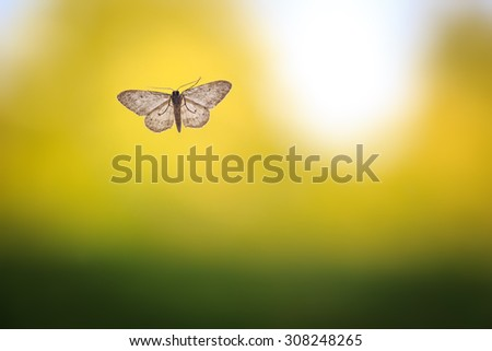 Moth on clean and simple green background. nature, texture, background, animal, insect themes